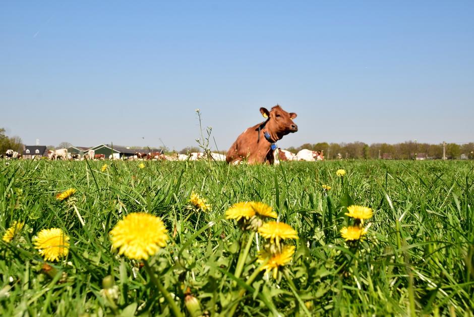 prachtige lentedag