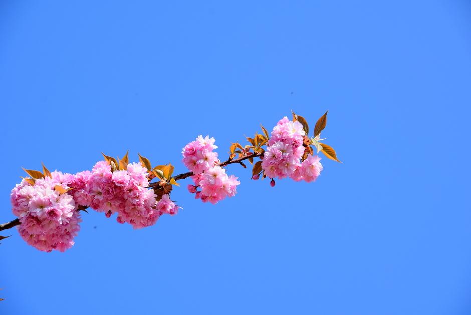 prachtig zonnig lenteweer