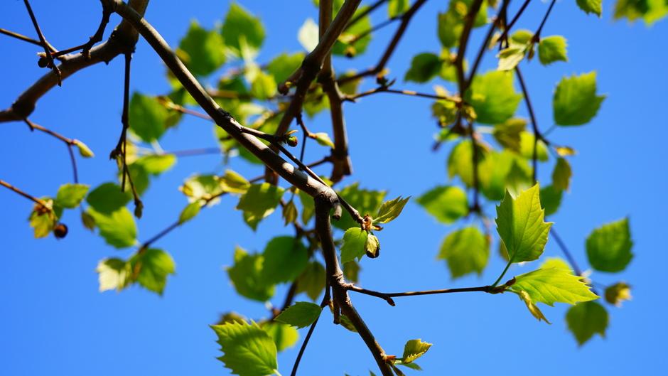 Zonnig en blauwe luchten