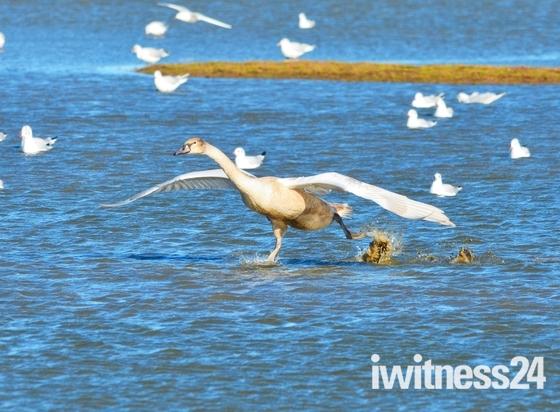 swan cley marsh