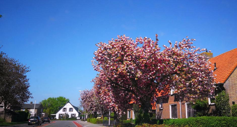 Mooie lentedag in Doornenburg