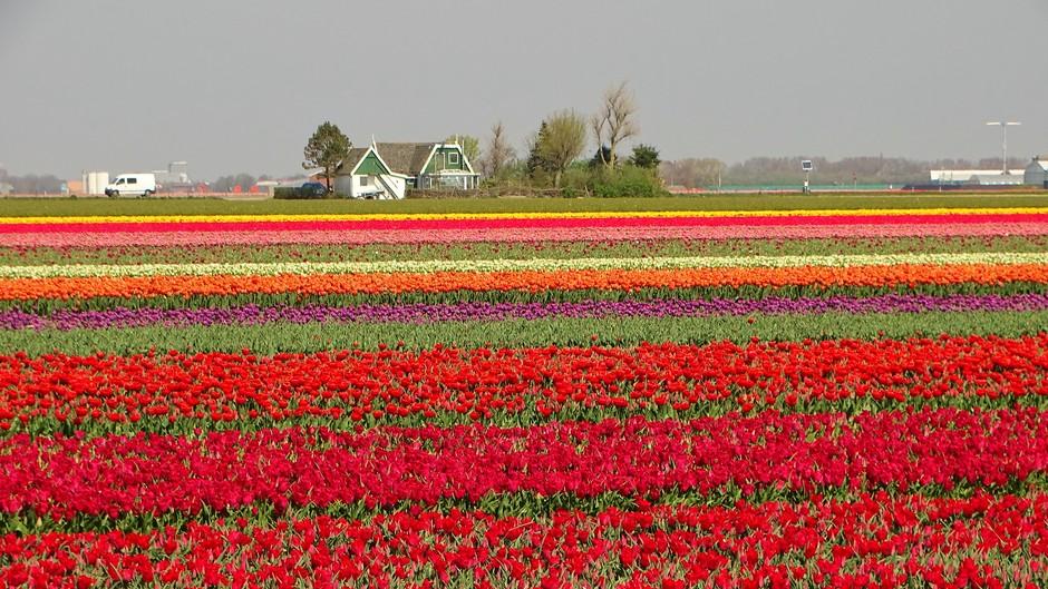 Van Gogh in Noord-Holland.
