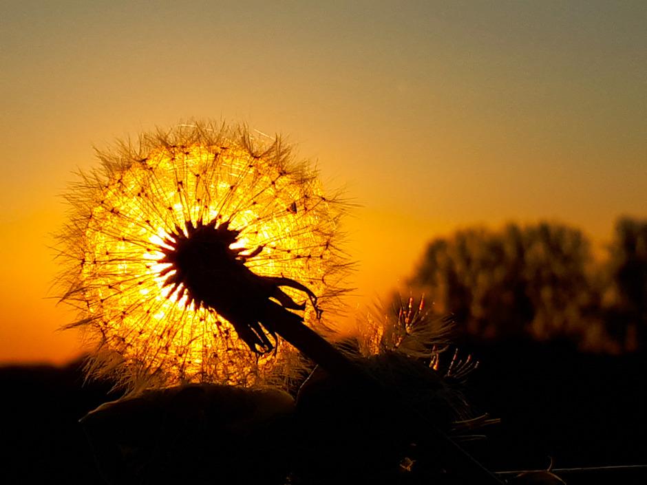 zonsondergang Oude Wetering