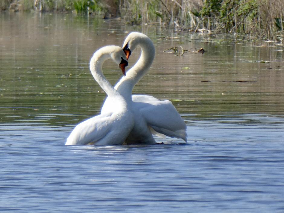 Liefdesbetuigingen in de lente