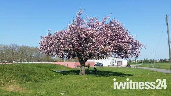 Spring and Sunshine in Barking Park