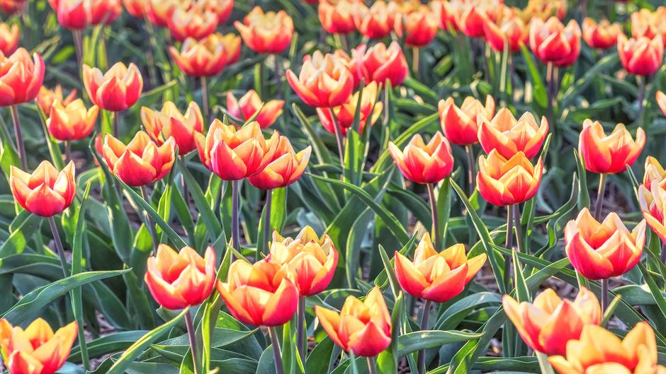 22-04-2019 Op en top lente in Tubbergen, Overijssel