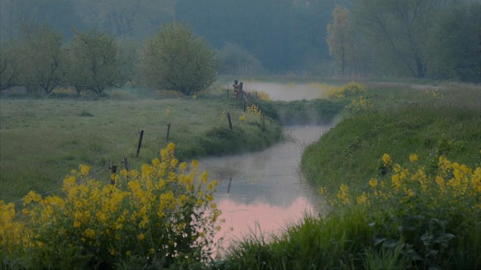 Ochtendnevel deze 2e paasdag vanmorgen vroeg in het Veld.