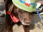 Maxi trying out the Easter Bonnets at Chedgrave PC Easter Egg Hunt