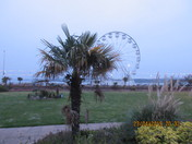 The Exmouth Wheel shot behind the palm tree.