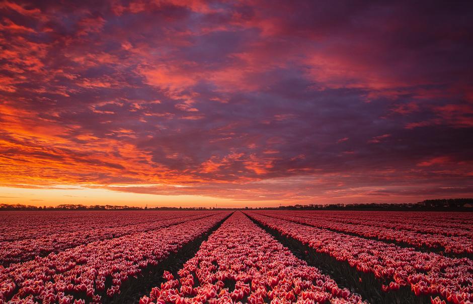 Prachtige zonsopgang boven tulpen