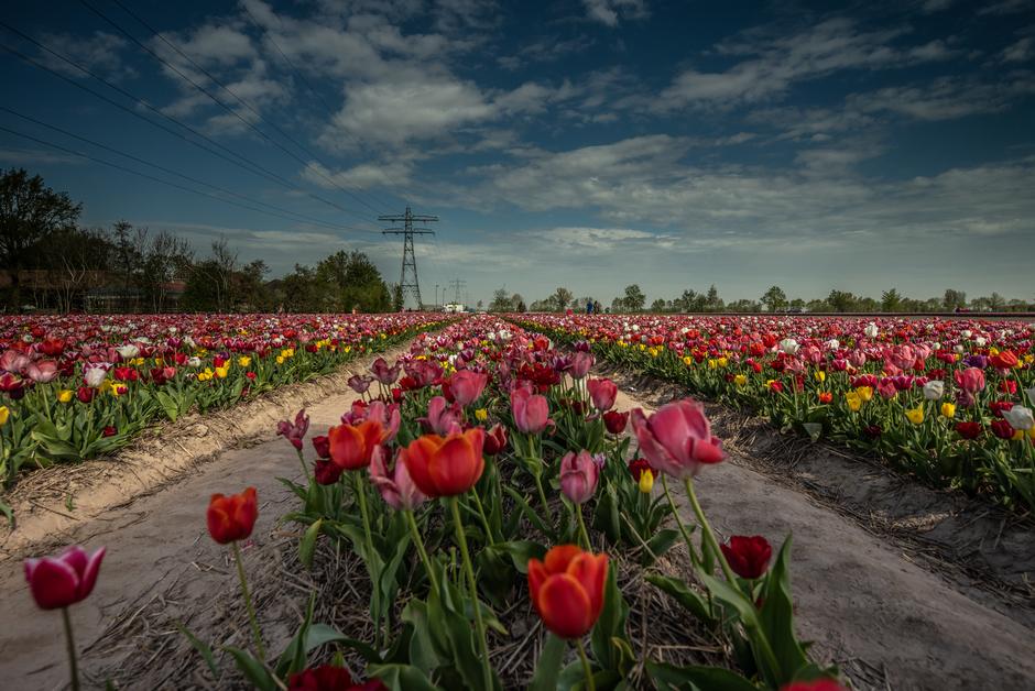 Wolkenluchten boven Marknesse bij de tulpen