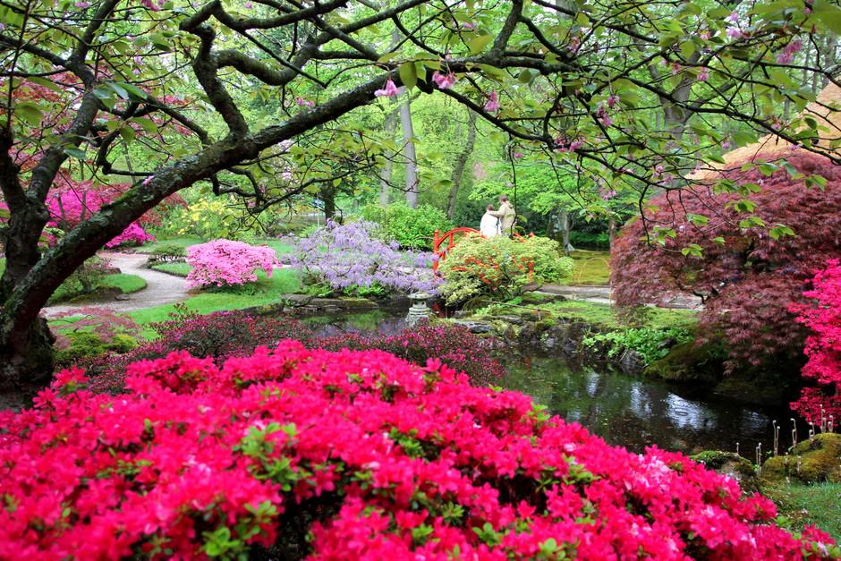 groeizaam weer....lentebloeiers
