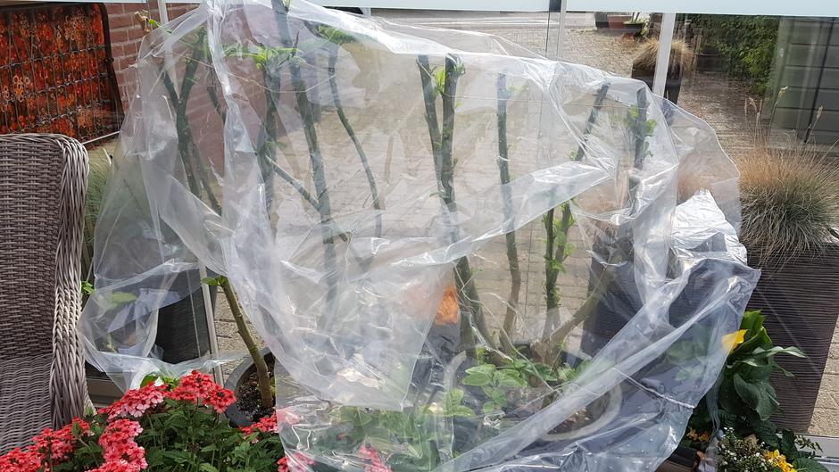 Kwetsbare planten beschermen voor de komende nachtvorst