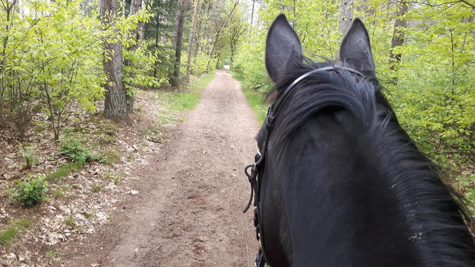 Te paard het bos in.