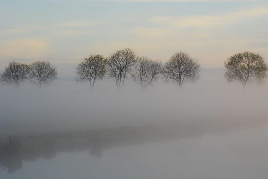 Zwevende bomen