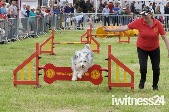 Hadleigh May show 2019  - 2