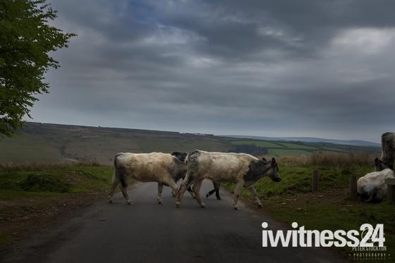 moorland traffic