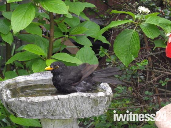 Birds keeping cool