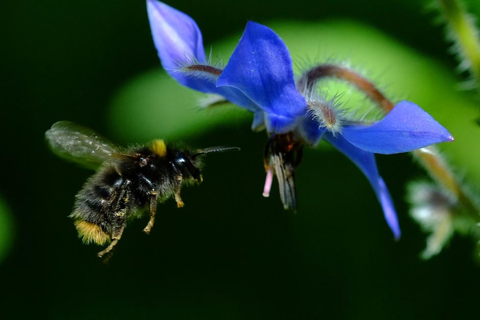 bloemetje - bijtje