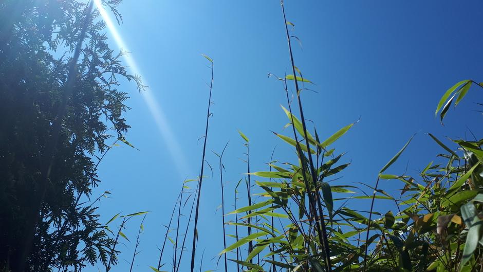 knalblauwe lucht en een warme zon