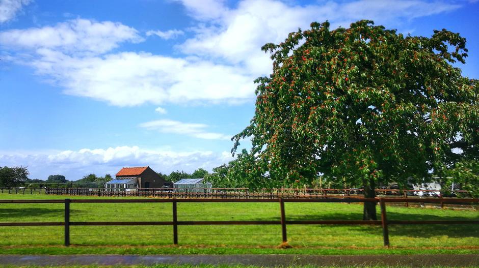 Wolken blauw en regen veel kersen aan de boom