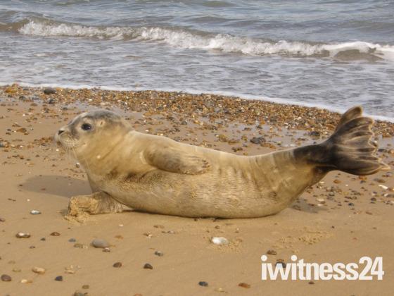 Seal on the beach.