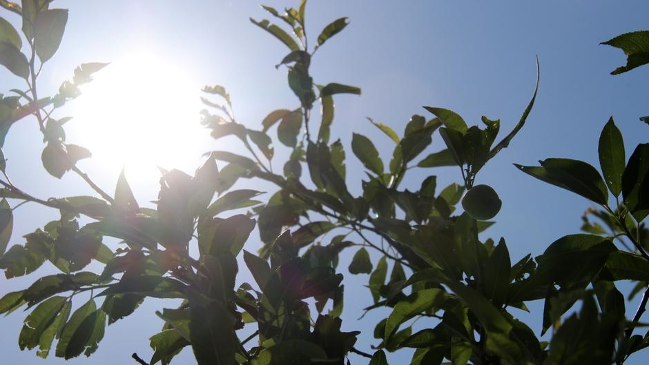 zon op de amandelboom in een blauwe lucht