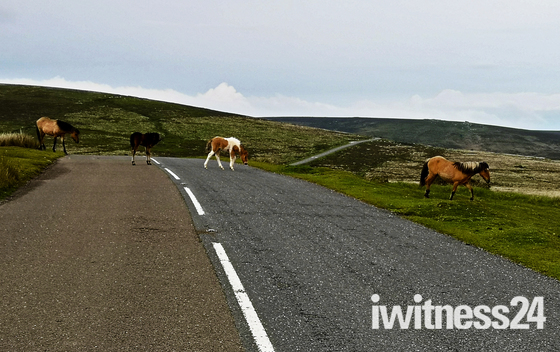 Dartmoor Traffic