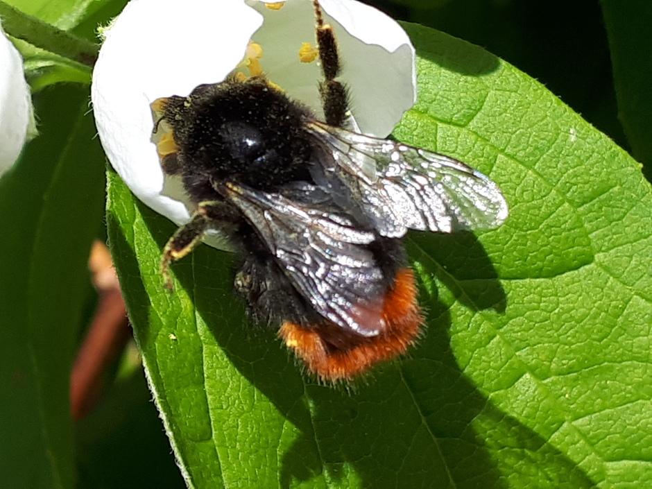 als de zon gaat schijnen komen de bijtjes