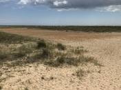 Great Yarmouth Dunes