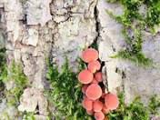 Cute Fungi