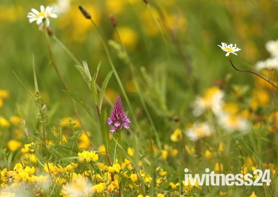A beautiful summer meadow.