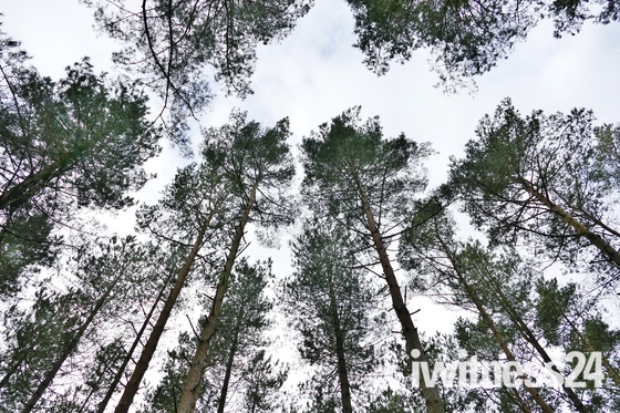 PROJECT 52, LOOK UP, TREE CANOPY
