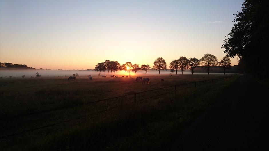 Opkomende zon met grondmist