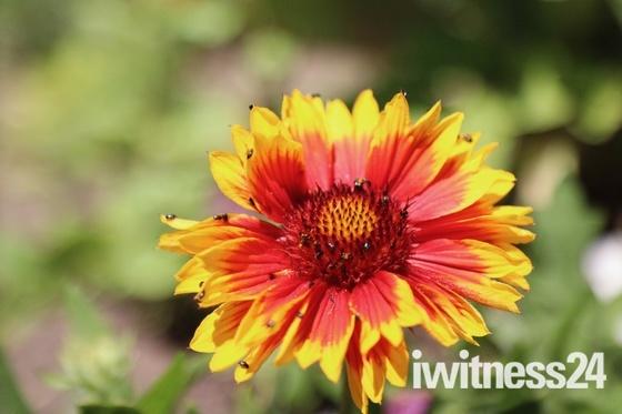 Stunning summer flower