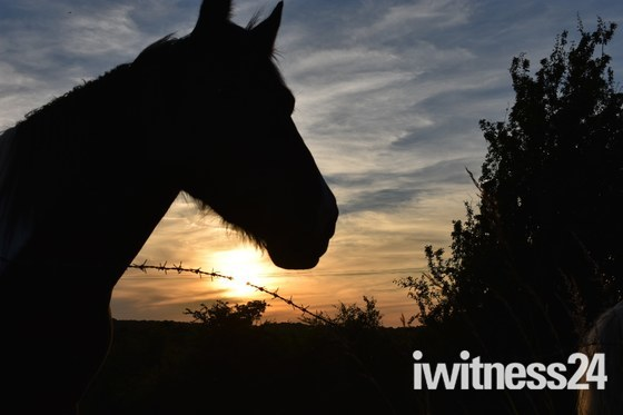 A beautiful sunset with the horse observing