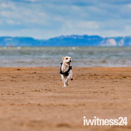 Gizmo enjoying the last day of June ! On the Beach in Exmouth
