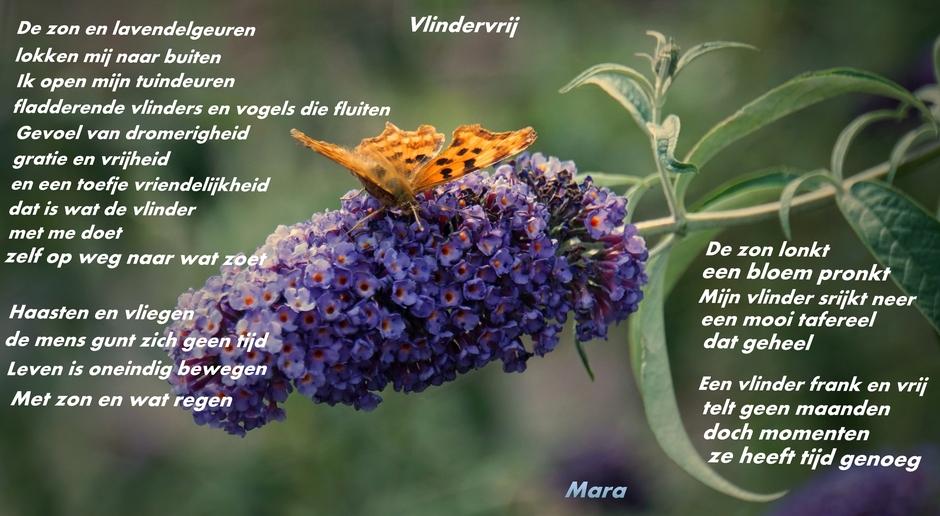 Voor de liefhebber, een ode aan de Vlinder.