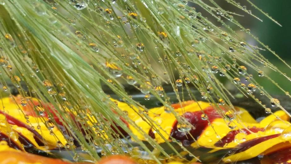 gekleurde regendruppels