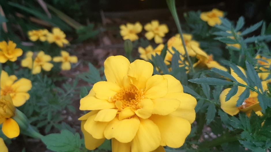 Plantjes in bloei