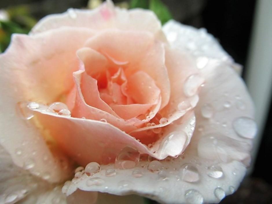 Bllooming in the rain