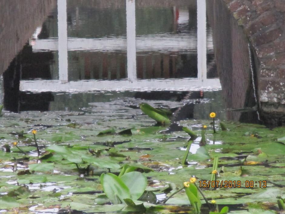 Waterafvoer  doorkijk naar de molen