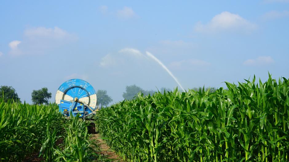 Maisveld wordt beregend