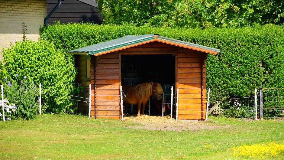 Pony zoekt schaduw op