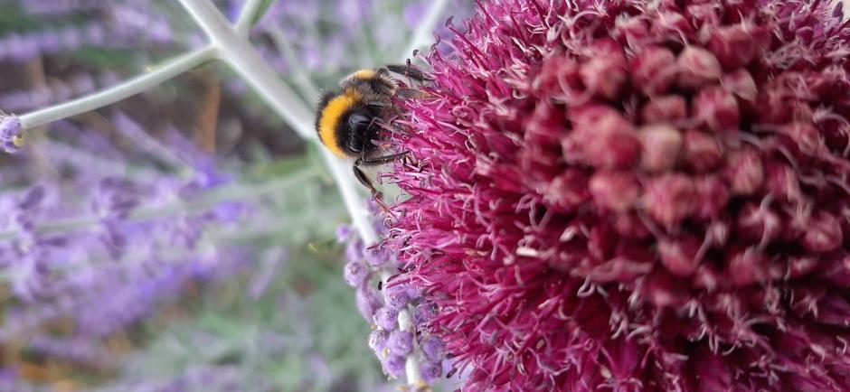 Bloemen met bijen