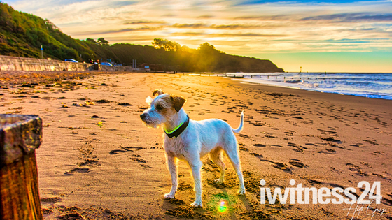 Gizmo out for a Sunrise walk on the Beach