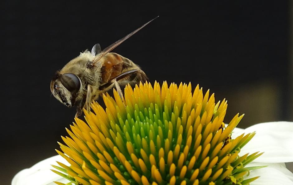 Bij leeft van nectar.