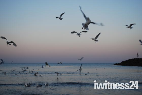 Seagulls Picnic Sidmouth Beach