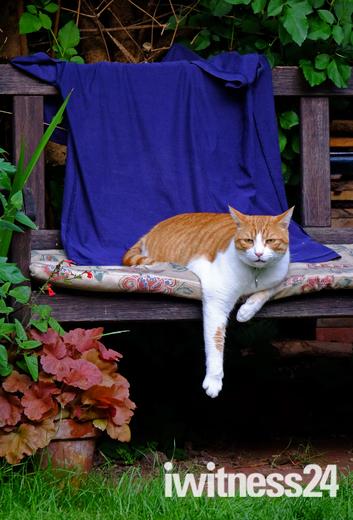 Hot cat !