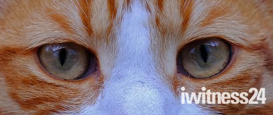 Cats eyes :)